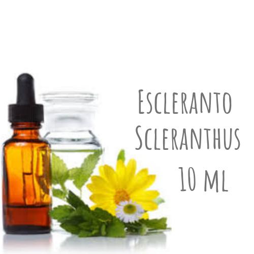 Escleranto - Scleranthus 10ml